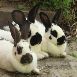 Geschwindigkeit Dating für Kaninchen 24 Jahre alt mit 18 Jahren